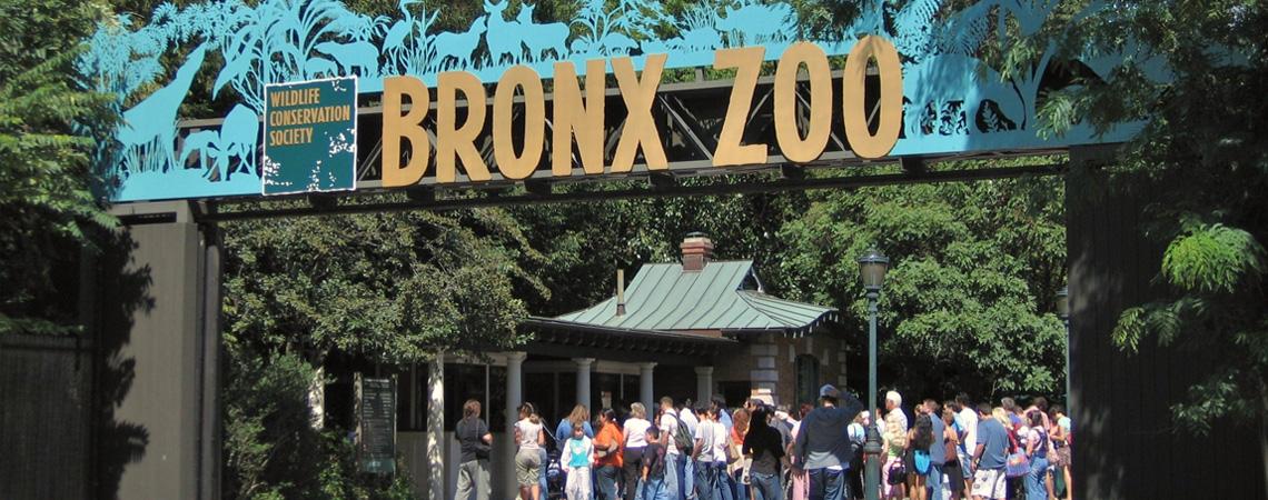 Fordham - Living in Bronx